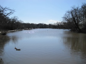 Connaught Water in Epping Forest by Juliamaud