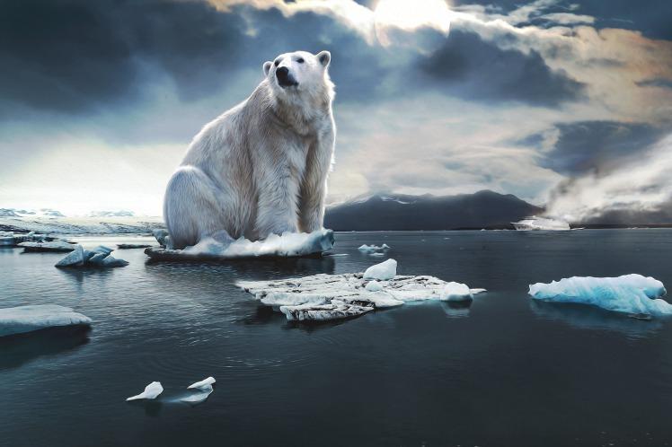 polar-bear by pixundfertig